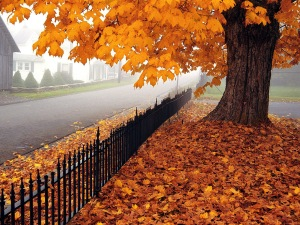 Autumn-Time-in-Nature-Wallpaper